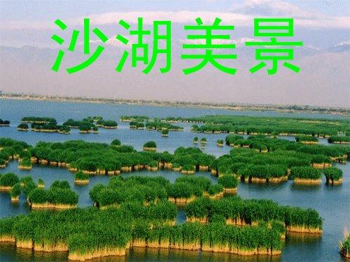 银川旅游包车推荐沙湖影视城贺兰山岩画一日游